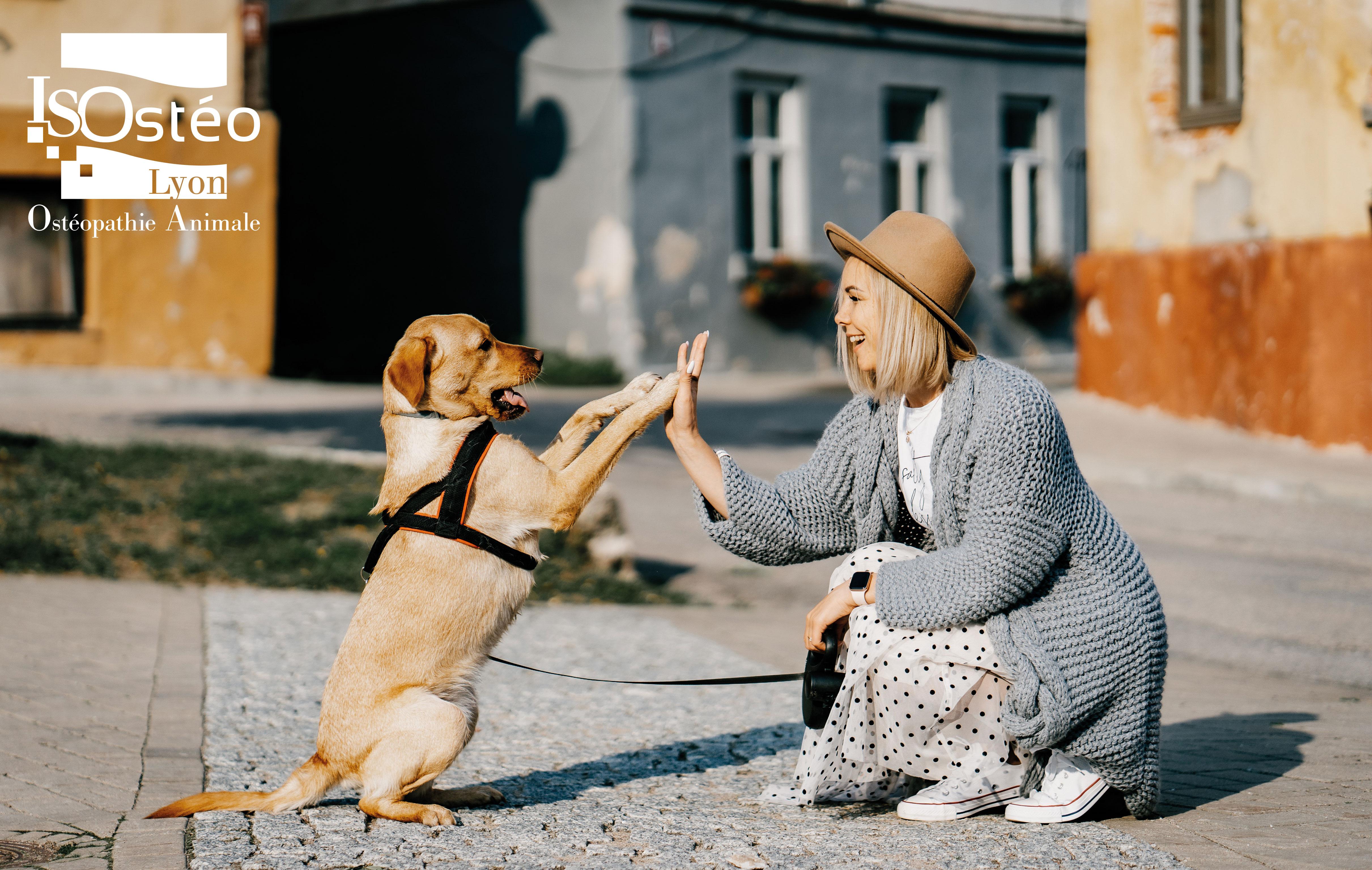 chien debout qui tape ses pattes contre la main d'une femme accroupie en face de lui. Représente une soignante qui revient voir son patient en bonne santé. Logo ISOstéo Animale blanc en haut à gauche de la photo