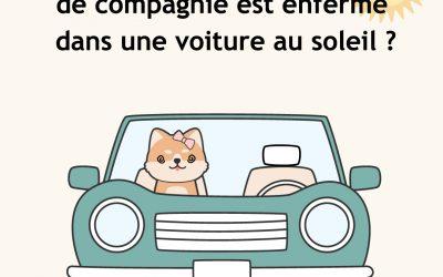 Que faire lorsqu'un animal est enfermé dans une voiture au soleil ?