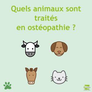 quels animaux sont traités en ostéopathie animale ?