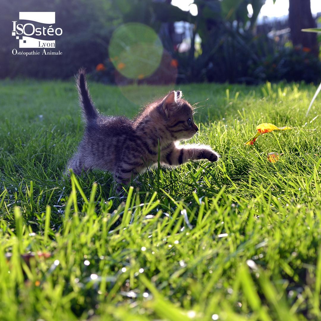 chaton dans l'herbe, belle photo avec effet de lumière